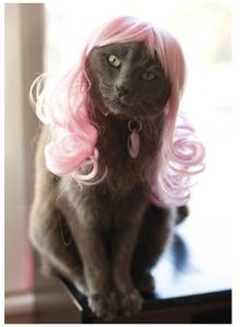 kittywigs.com