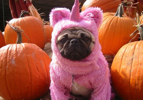pug costume unicorn