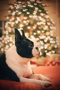 not my dog and not my tree... but a girl can dream.